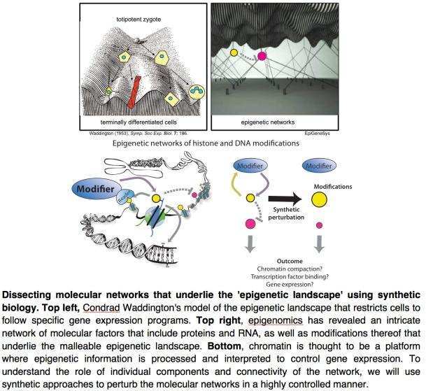 Epigenetic Networks
